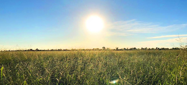 rama_sementes-forrageiras-agricultura-pecuaria_produto-brachiaria-brizantha_caracteristicas-2